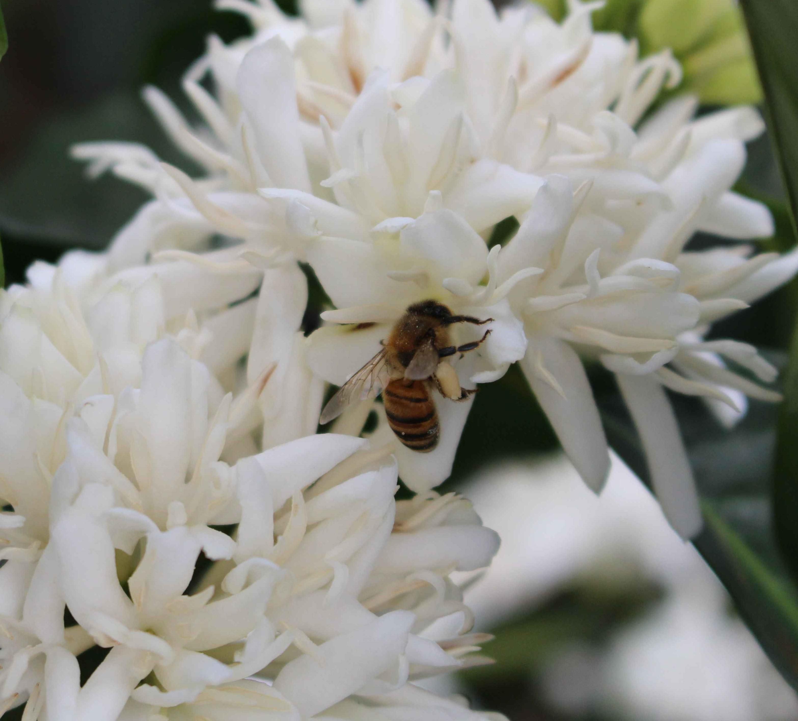 VB-abeilles-ConvertImage